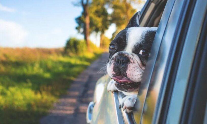 Cinco dicas para viajar de carro com seu pet