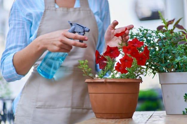 Você sabia que existem flores adequadas para varandas e sacadas?