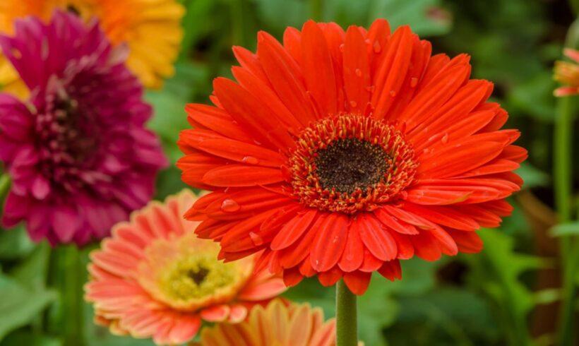 Dicas de sete flores fáceis de cultivar em casa