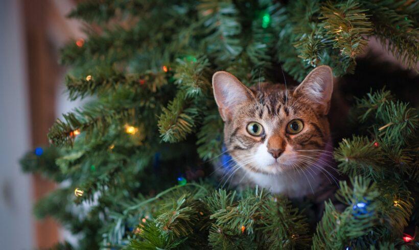 Cuidados com os gatos no natal