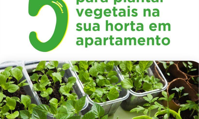 5 dicas para plantar vegetais na sua horta em apartamento.